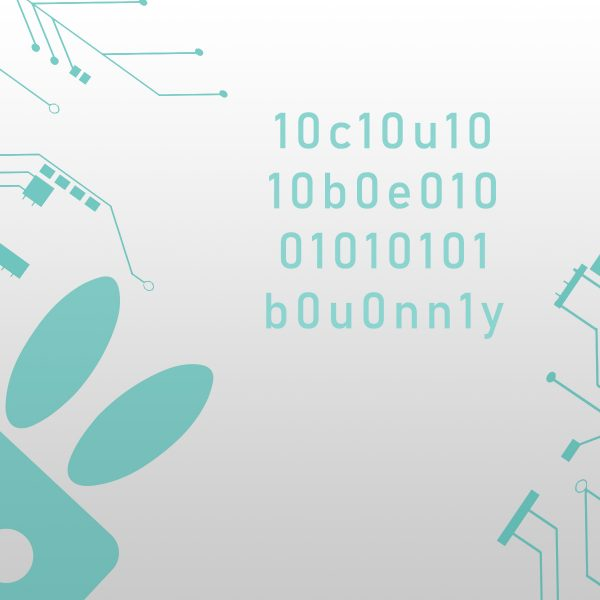Developement Cubebunny